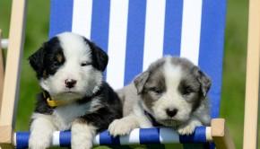 Puppies Deckchair