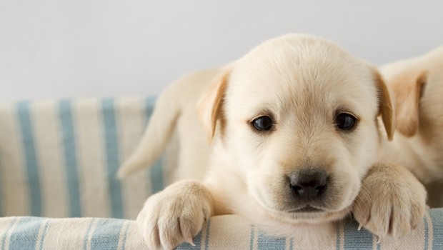 Puppy in Bed